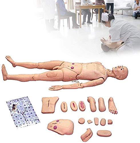GHDE&MD Lebensgröße, Multifunktional Patientenversorgungssimulator Männlich Und Weiblich Pflegemodell Menschliches Anatomisches Modell, Zum Krankenpflegeausbildung