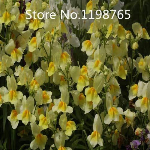 Verde: ¡Promoción de precio especial!100 semillas de sapo de lino 10 tipos de empaque mixto, semillas de flores de alta germinación jardín bricolaje flor perenne P