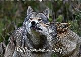 Willkommen Wolf (Wandkalender 2020 DIN A2 quer)