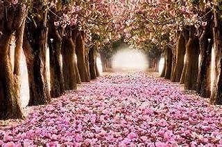 comprar comparacion 10 flores de cerezo rosa semillas de árboles bonsai flor sakura jardín