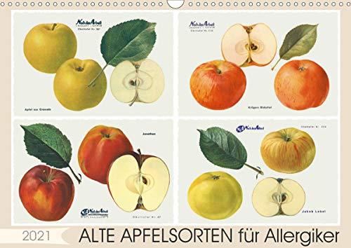 Alte Apfelsorten für Allergiker (Wandkalender 2021 DIN A3 quer)