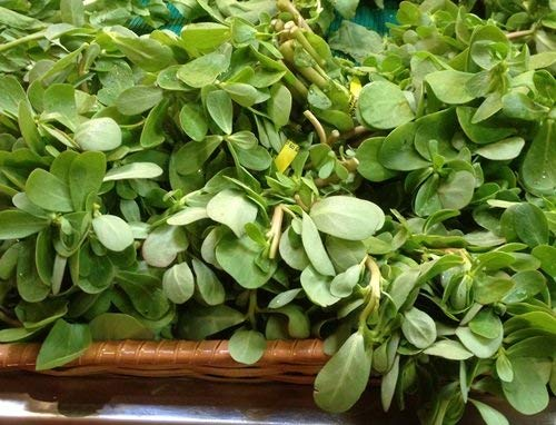 Red Gruner Purslane Seeds by Stonysoil Seed Company. Delicious as a Vegetable, Also Medicinal and Healthy with high Concentration of Omega 3 Fatty Acids