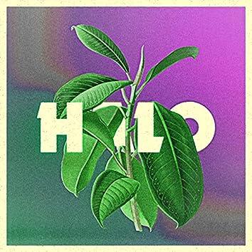 Halo (Rubber Plant Version)