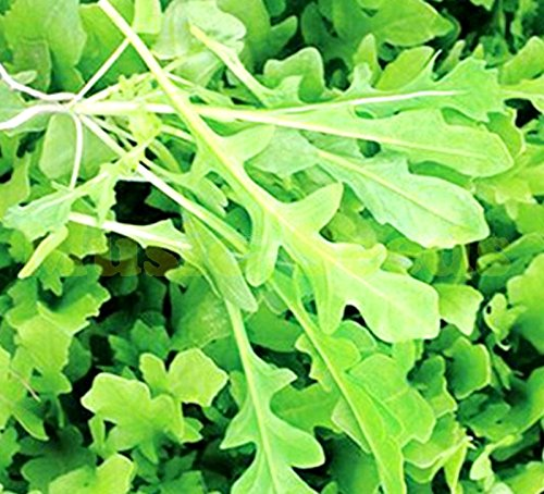 1bag = 100pcs VENDUES HOT RARE JAPANESE Eruca GRAINES sativa mini-Roquette BONSAI Tomate cerise légumes GRAINES BIO Maison & Jardin