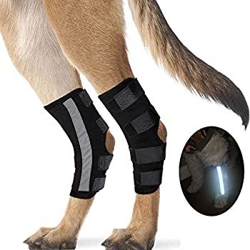 Dog Leg Brace for Hind Leg Pair of Canine Back Hock Wraps with Safety Reflective Strap Back Leg Support for Dogs Heals and Prevents Injuries Sprains Torn Acl and Joint Pain made of Neoprene