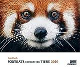 Tim Flach: Porträts bedrohter Tiere 2020 – Tier-Fotografie – Wandkalender 58,4 x 48,5 cm – Spiralbindung