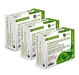 Centella asiática (complex) 2500 mg 60 cápsulas vegetales con castaño de indias, vid roja, ginkgo biloba y vitamina B-6. (Pack 3 Unid.)