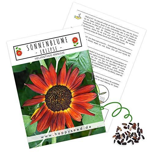 Farbenfrohe Sonnenblumen Samen mit hoher Keimrate - Blumensamen für einen bunten & bienenfreundlichen Garten (1x Eklipse)