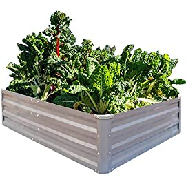 FOYUEE Galvanized Raised Garden Beds for Vegetables Metal Planter Boxes Outdoor Large Patio Bed Kit Planting Herb 4 x 3 x 1ft 5 ✔ SIZE: 2FT(L) x 2FT(W) x 1FT(H), 4FT(L) x 3FT(W) x 1FT(H), 5FT(L) x 3FT(W) x 1FT(H), 6FT(L) x 3FT(W) x 1FT(H) ✔ OPEN BOTTOM: Sits on the ground garden bed, provide good drainage, keep weeds away from soil, defense against pests, and protect your plants. ✔ DURABLE: Made of stable thickened galvanized metal, reinforced corners and frame it all construction with anti-rusty coating for long-time use