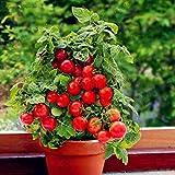 50pcs / bag pomodoro semina semi, ciliegio dolce frutta ortaggi biologici tomato garden, facile da coltivare: 4