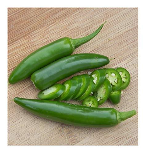 David's Garden Seeds Pepper Serrano SL4793 (Red) 50 Non-GMO, Heirloom Seeds