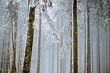 M301 - Papel pintado fotográfico (350 x 250 cm), diseño de abeto en la nieve