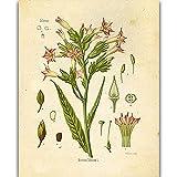 Cartel retro de planta salvaje planta flor sala de estudio pintura para sala de estar pintura de peonía decoración de habitación pintura de tela K 40x60cm