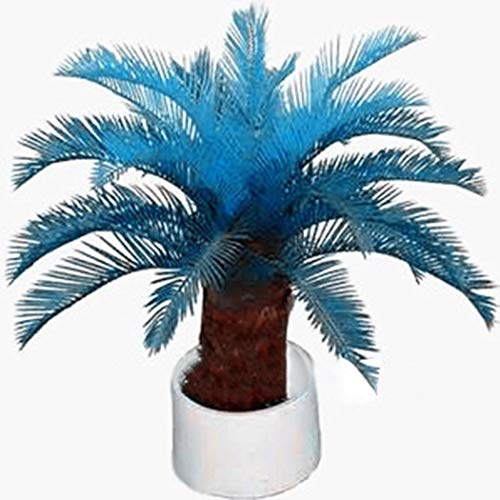 Tomasa Samenhaus- 100 Stücke Winterharter Blau Palme Samen Selten Zwerg-Palmen Saatgut Baum Samen winterhart mehrjährig Garten Pflanzen Saatgut Zimmerpflanzen