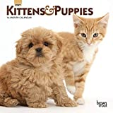 Kittens & Puppies 2021 7 x 7 Inch Monthly Mini Wall Calendar, Animals Cute Kittens