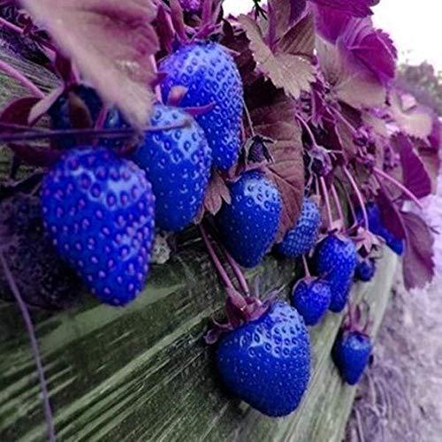 Kisshes Giardino - 50 pezzi Large Fruit Strawberry Seeds Dolce aromatico di frutta e verdura Semi di fragola per giardino Balcone/Patio