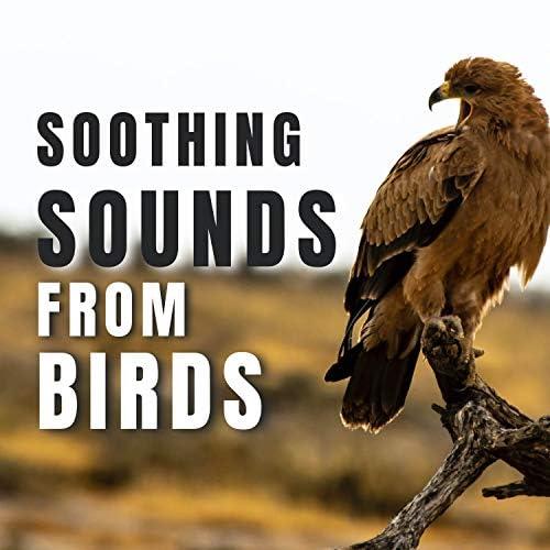 Bird Songs, Calm Singing Birds Zone & Sleep Sounds of Nature
