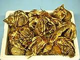 石鯛釣りの餌  新鮮ヤドカリ60匹