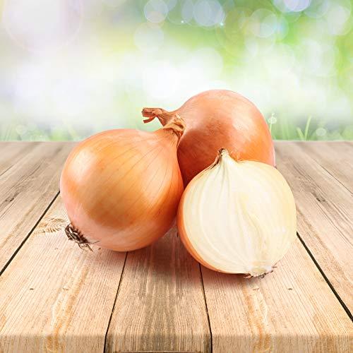 Gemüsezwiebel 250 x Samen - Aus Portugal 100% Natürlich Ohne Chemische Anzuchthilfe Oder Gentechnik, Einfach Nur Natur Pur
