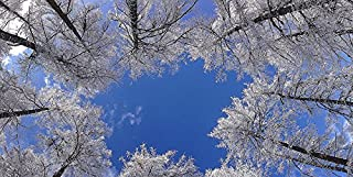 Winter Trees - 2ft x 4ft Drop Ceiling Fluorescent Decorative Ceiling Light Cover Skylight Film