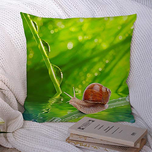 Decorative Pillow Covers Decor Square Soft Morning Ecology Leaf Dew On Spring Grass Animals Wildlife Shallow Textures Springtime Animal Makro Throw Pillowcase Cushion Cover for Chair 16x16 Inch