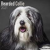 Bearded Collies 2021 - 16-Monatskalender mit freier DogDays-App: Original BrownTrout-Kalender [Mehrsprachig] [Kalender] (Wall-Kalender)