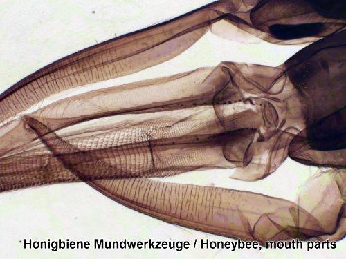 25 Mikroskop Dauerpräparate von Bresser in edler Holzbox Erfahrungen & Preisvergleich