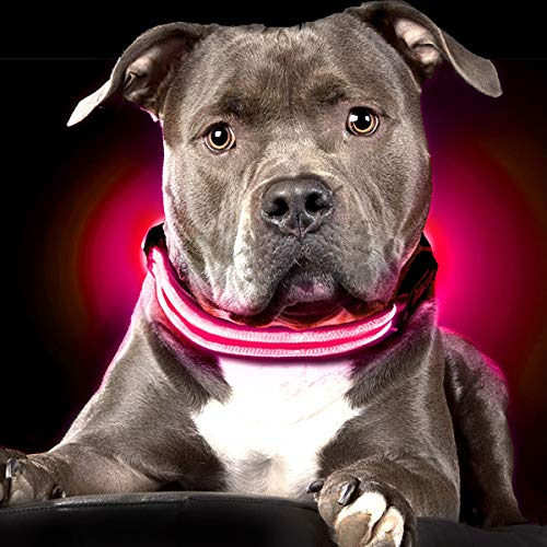 Shine for Dogs Ultimate LED Dog Collar – USB...