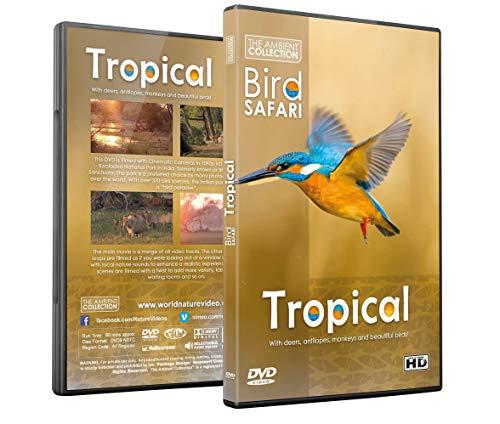 Entspannung DVD - Vogel Safari - Tropische Vögel, Tierwelt und Natur mit Entspannender Musik oder Naturgeräuschen