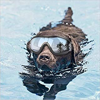 YAWALL Dog Goggles Pet Cool Sunglasses UV Protection Windproof Goggles Pet Eye Wear Medium Large Dog Swimming Skating Glasses Accessaries