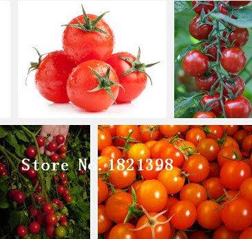 tomates de semences plants de semences de légumes de tomate 100 pcs / paquet