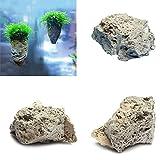 Hinmay Piedra pómez decorativa para acuario, diseño de roca y pómez...