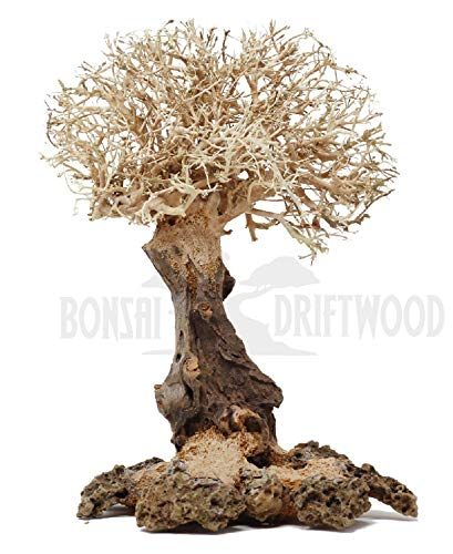 Bonsai Driftwood Aquarium Tree Natural, Handcrafted Fish Tank Decoration | Helps Balance Water pH Levels, Stabilizes Environments | Easy to Install | BFA