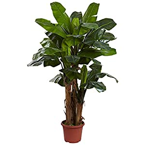 Nearly Natural 5434 Giant Triple Stalk Banana Tree UV Resistant, 7-Feet