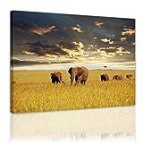 Bilderdepot24 Cuadros en Lienzo Elefantes XXL - 80x60 cm 1 Pieza - Enmarcado Listo Bastidor Imagen. Directamente Desde el Fabricante