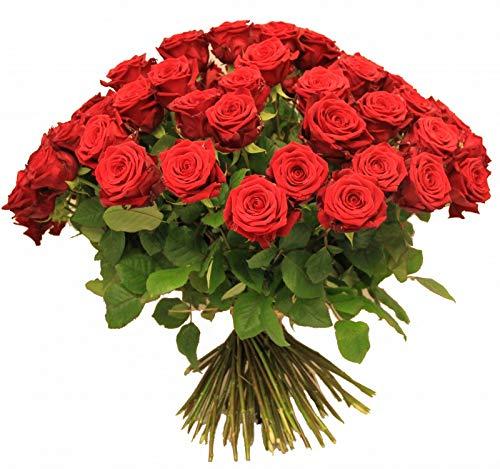 50 rote Rosen -Rosenrot- frischer Rosenstrauß, Lieferung - Blumenstrauß mit roten Rosen mit Gratis Grußkarte
