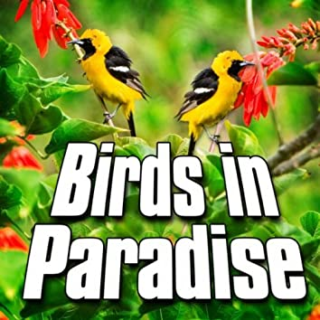 Birds in Paradise (Nature Sound)