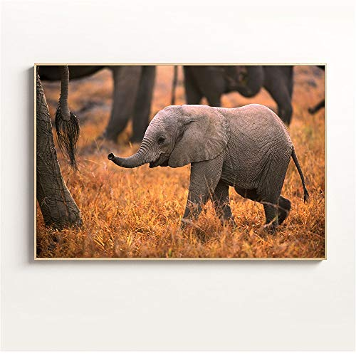 Puzzle 1000 Piezas El pequeño Elefante Que no Puede Seguir el Ritmo del Equipo Puzzle 1000 Piezas Animales Educativo Divertido Juego Familiar para niños adultos50x75cm(20x30inch)