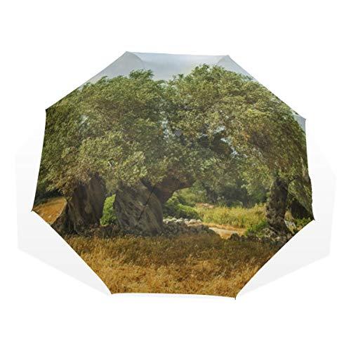 Reiseschirm Olive Olive Trees In Olive Gardens 3-fache Anti-UV-Kompaktkunst Leichte Faltschirme (Außendruck) Winddicht Regen Sonnenschutzschirme Für Frauen Mädchen Kinder