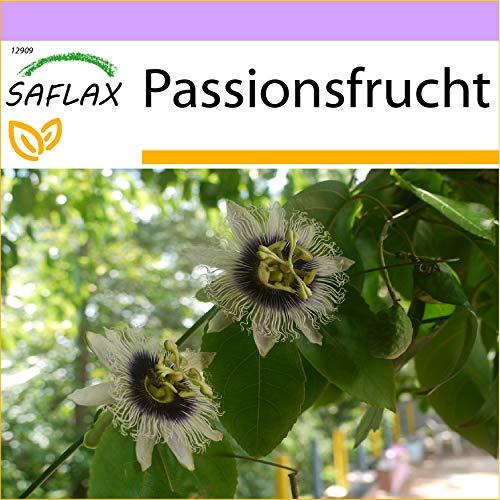 SAFLAX - Maracuja - 40 semi - Passiflora edulis