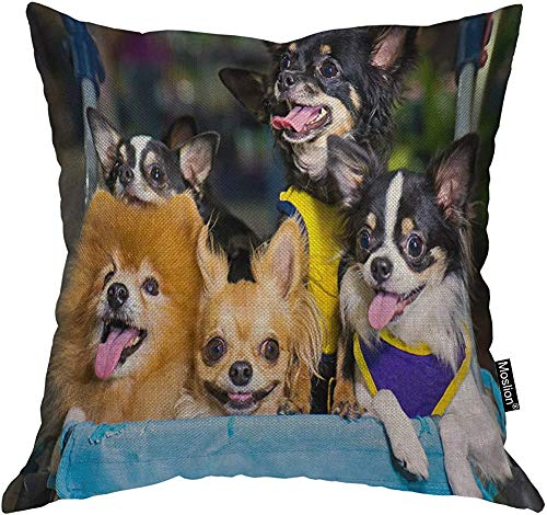 Bulldog - Funda de almohada de 45,7 x 45,7 cm (45,7 x 45,7 cm), diseño de perro chihuahua