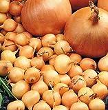 Adolenb Jardin- 100 Pcs Énormes Graines D'oignons, 12 Types Bio Oignons Vivaces Légumes Graines Oignon Graines Tapis Légumes Graines Jardin