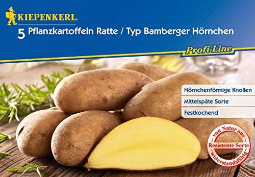La Ratte Kartoffeln