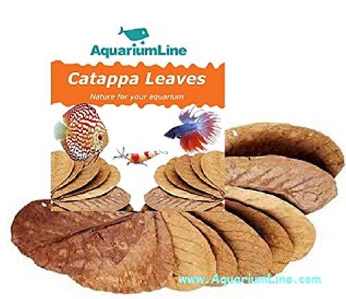 AquariumLine Nano Catappa Leaves