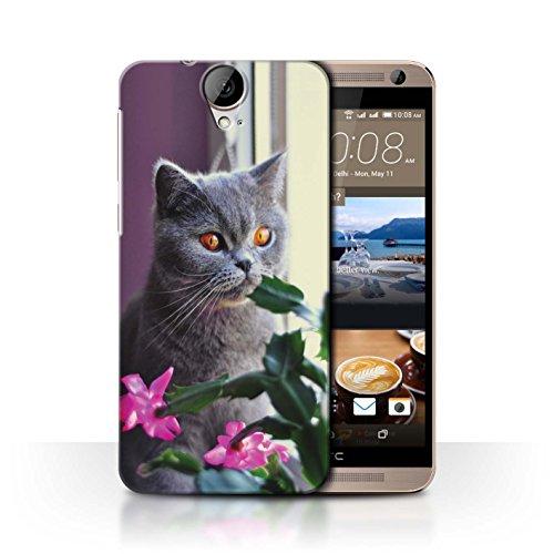 Stuff4® Hülle/Case für HTC One E9/E9+/Plus/Britisches Blau/Kurzes Haar Muster Katze/Katzenrassen Kollektion