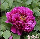 Semillas de Flores Paisaje para,Las Semillas de Flores de peonía envían Fertilizante Cuatro Estaciones de floración Interior de la Planta de Maceta cápsulas A100,perennes Semillas de Flores