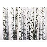 Fototapete Wand Foto Tapete Bild Vliestapete selbstklebende Textiltapete - BLACK AND WHITE BIRCH TRUNKS - Birkenwald 3D perspektive Birke Stämme Wald - no. 044, Größe:300x210cm Vlies