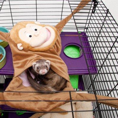 Marshall Hangin' Monkey Ferret Hammock