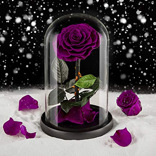 puto Preserved Real Rose Eternal Rose in Glass Dome Gift for Her Thanksgiving Christmas Valentine's Day Birthday Mother's Day (Purple)