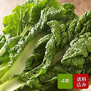 かつお菜 4束入 福岡県産 カツオ菜 鰹菜【年末日付指定】